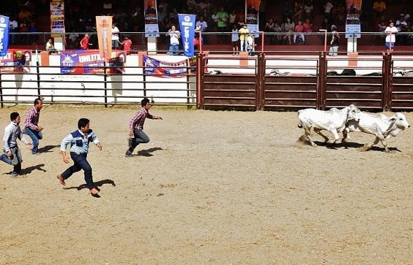 Masbeyt Palani and Rodeo Day 3 090 (741x477)