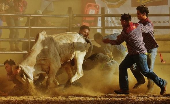 Masbeyt Palani and Rodeo Day 3 232 (741x454)