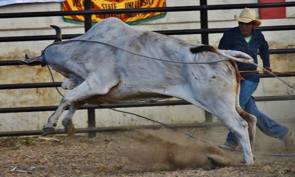 Masbeyt Palani and Rodeo Day 3 243 (960x577) (960x577)