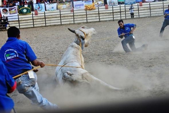 Masbeyt Palani and Rodeo Day 3 274 (960x640)