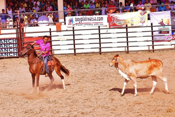Masbate Rodeo 2014 248