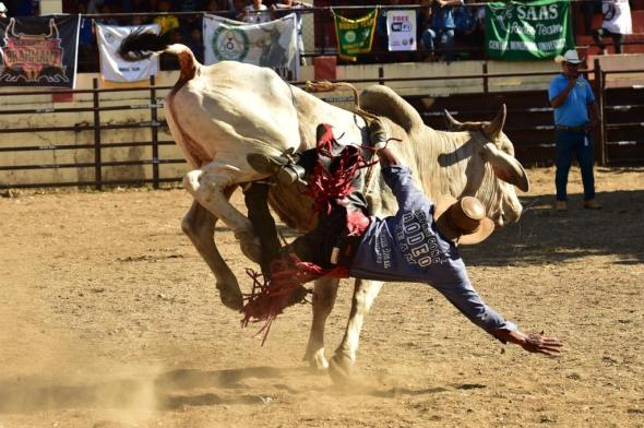 A cowboy must stay on top of the bull for 8 seconds to qualify. Very vew do. And all of them eventually fall off the bull.