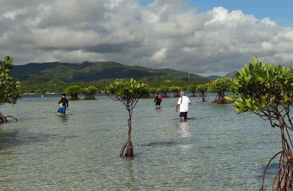 the reef is also a mangrove preserve
