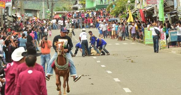 """action can start right on the streets, when  a cow decides to be """"pasawy"""" on the cattle drive"""