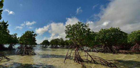 Mangroves at Buntod