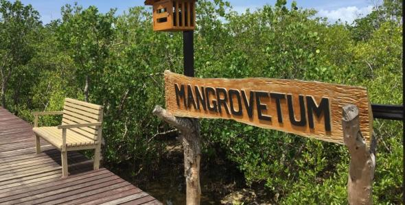 a mangrove park at the Boulevard, near the hotels